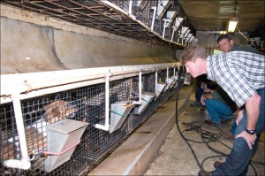 Missouri Attorney General Chris Koster (foreground) and Dept. of Agriculture Director Jon Hagler inspect dogs in Doolittle; Mo. before Humane Society staff begin seizing the animals as part of a Prosecution Bark Alert raid. (Photo courtesy state of Missouri)