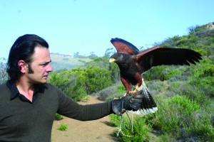Master falconer Nricco Iseppi and Maya, one of three Harris Hawks he owns, near his house in Malibu. (Knowles Adkisson editor@smdp.com)