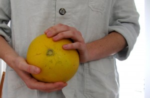 The pomelo is now available at Santa Monica's Farmers' Markets. (Maria Zizka editor@smdp.com)