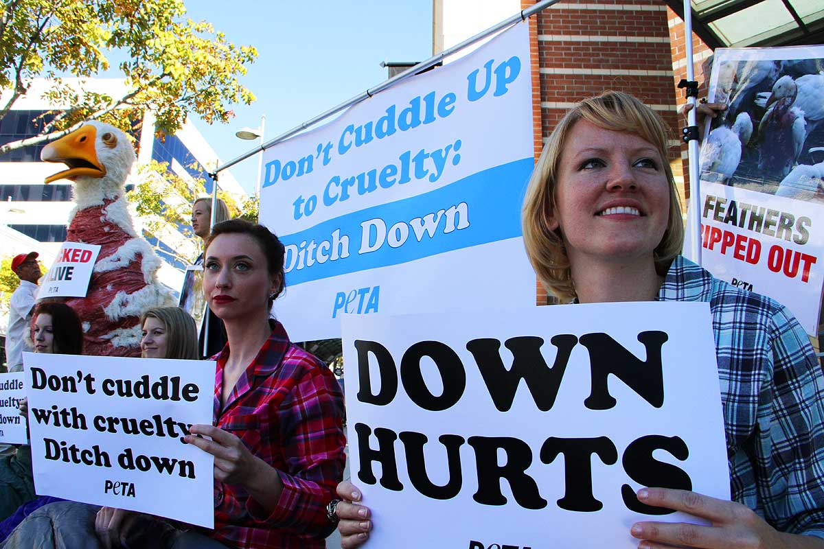 PETA is not down with down - Santa Monica Daily Press